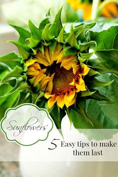 how to cut sunflowers so they last in your arrangements. Tips that you can use for other flowers as well from Duke Manor Farm.