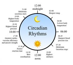 Circadian rhythm clock in humans. #worldsleepday #wsd #circadianrhythm