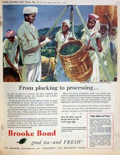 Brooke Bond and Co - Graces Guide