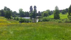 Meadow at Chartwell National Trust, Kent