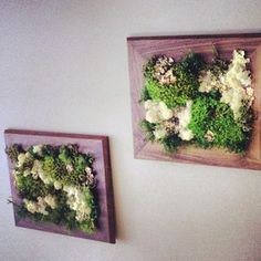 Moss art at my local coffee shop!