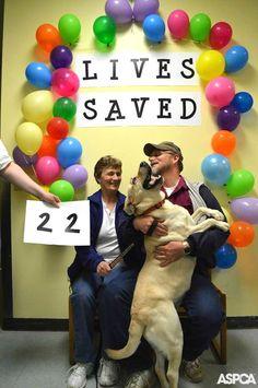 Coastal Humane Society - Animals and Pet Supplies Humane Society Adoption, Humane Society Volunteer, Pet Adoption, Shelter Dogs, Rescue Dogs, Animal Rescue, Adoption Records, Dog Clinic, Dog Daycare