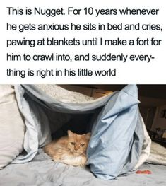 """Adorable Animal Memes To Serve As A Reminder That Everything's Gonna Be Okay - Funny memes that """"GET IT"""" and want you to too. Get the latest funniest memes and keep up what is going on in the meme-o-sphere. Funny Animal Memes, Cute Funny Animals, Funny Animal Pictures, Cute Baby Animals, Cat Memes, Funny Cute, Animals And Pets, Cute Cats, I Love Cats"""