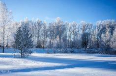 Зимний пейзаж.Мороз и солнце! (9)