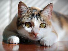 kibby cat