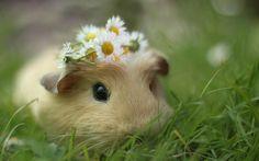 Seu dia está meio devagar? Estas imagens de hamsters fofinhos e engraçados vão fazer você sorrir! Veja!