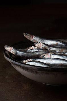 glisten in the dark fish