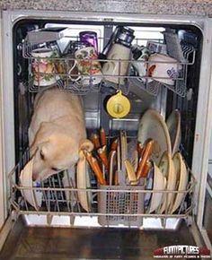 Washing Machine Dog - Funny Dogs