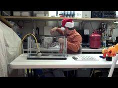 Sulfur Hexafluoride: Bubbles, Boat, Fire Extinguishing & Jingle Bells