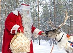 Joulupukki syöttää porolle jäkälää