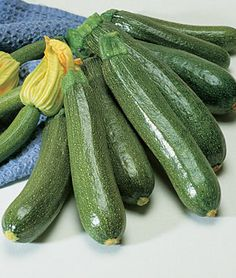 Squash Summer Burpee Fordhook Zucchini Organic - All-America Selections winner for vigorous bush-like plants. Types Of Zucchini, Burpee Seeds, Pizza Style, Squash Seeds, Tomato Seedlings, Still Tasty, Growing Tomatoes In Containers, Organic Seeds, Organic Plants