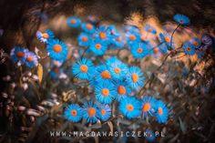Magda Wasiczek Photography