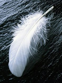 feather tattoo-ified