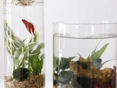 Create your very own indoor water garden as a room accent, table centerpiece or for a child's room.