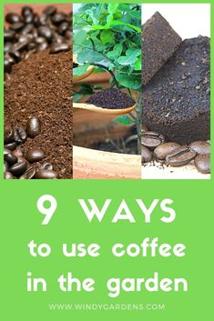 We love our morning cup of coffee! Did you know you can use the spent coffee grounds in your garden?