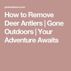 How to Remove Deer Antlers | Gone Outdoors | Your Adventure Awaits