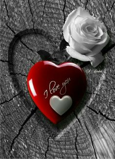 I Love You (With Red And White Heart & White Rose Flower).