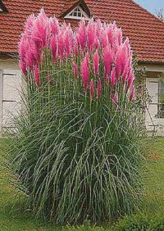 okrasné trávy - Hledat Googlem