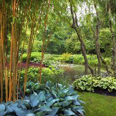 hostas and bamboo. Longstock Water Gardens