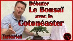 Débuter le bonsaï avec le Cotoneaster                              …