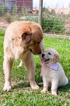 meeting the new kid on the block