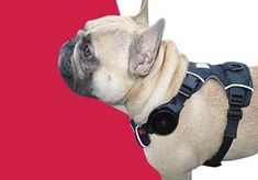 Where can I find a GPS dog tracker in Ireland? Online or instore, PawTrails has you covered. Find out where the nearest store is from you and get information on our pet care technology. Activity Monitor, Pet Care, I Can, French Bulldog, Ireland, Technology, Pets, Store, Animals