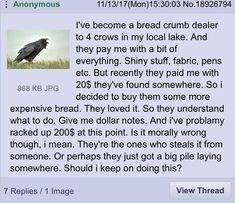 I could use some crow friends like this