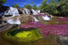"""Photographer Olivier Grunewald puts the spotlight on Cano Cristales ('River of Five Colors' or 'The Liquid Rainbow"""") in Sierra de la Macarena, Colombia by Rainbow River, Liquid Rainbow, Colombia Travel, Pamukkale, Les Cascades, Natural Wonders, Beautiful Landscapes, South America, Places To See"""