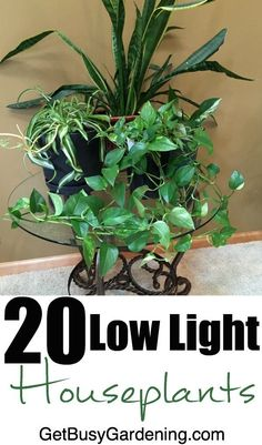 """Most houses don't get a ton of direct sunlight, and many rooms don't get any at all. If you've ever wondered: """"What low light houseplants can I grow in my indoor gardening space?"""" Then this list is for you 