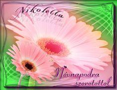 Nikoletta névnapi képeslap