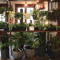 Pistils Nursery ~ Plant wall: remedy for a rainy day 2015