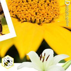👉Czy znacie i lubicie internetowe challenge?😲 Kojarzycie akcje, jak Movember czy ALS Ice Bucket Challenge, które angażowały miliony i budowały świadomość problemów zdrowotnych czy społecznych? Teraz mamy dla Was propozycję zaangażowania się w pomoc ginącym pszczołom.🐝 W skrócie chodzi o to, aby w swoim ogrodzie, na tarasie lub balkonie zasadzić roślinę przyjazną pszczołom, zrobić zdjęcie albo film i opublikować go w swoich mediach społecznościowych z hashtagami #bee #friendly #plant..