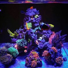 Saltwater Aquarium Decorations For Your Marine Tank Now for the enjoyable part-- saltwater fish tank designs are one element of marine fish keeping where you Saltwater Tank Setup, Saltwater Aquarium Beginner, Saltwater Aquarium Fish, Fish Aquariums, Marine Fish Tanks, Marine Tank, Coral Reef Aquarium, Marine Aquarium, Nano Reef Tank