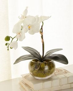 Shop Petite Orchid Phalaenopsis from John-Richard Collection at Horchow, where you'll find new lower shipping on hundreds of home furnishings and gifts. Faux Flowers, Silk Flowers, Plastic Flowers, Red Orchids, Orchid Arrangements, Flower Arrangement, Decoration Plante, Flower Garden Design, White Planters