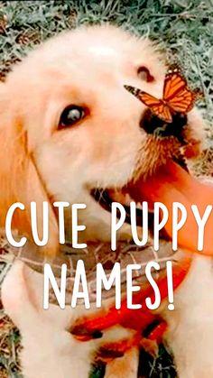 Cute puppy names!