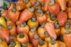 Guatemala.  How cashews grow...