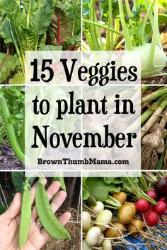 You'll be amazed at all the vegetables you can plant in November! These 15 delicious veggies love the cold, and you'll enjoy fresh vegetables all winter. Includes recommended varieties and planting tips. Container Gardening Vegetables, Planting Vegetables, Growing Vegetables, Veggies, Vegetable Gardening, When To Plant Vegetables, Perennial Vegetables, Veggie Gardens, Growing Tomatoes