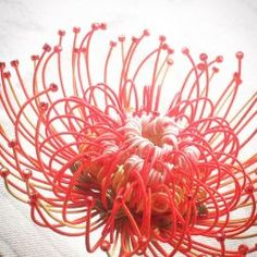 Diy Arts And Crafts, Diy Crafts, Quilling, Fiber Art, Decorative Bowls, Crafty, Pattern, Plants, Handmade