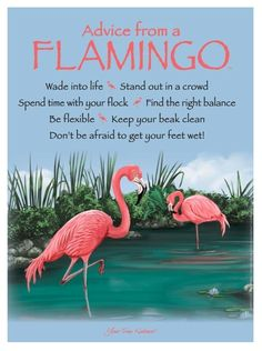 This special friend of nature shares its timely advice and heart-ticking wisdom! Advice from a Flamingo Wade into life Stand out in a crowd Spend time with your Flamingo Painting, Flamingo Decor, Pink Flamingos, Flamingo Outfit, Flamingo Gifts, Flamingo Pictures, Vintage Tin Signs, Flamingo Birthday, Pink Bird