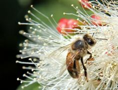 """Slower and natural readings of the French poem """"L'Abeille"""" by Paul Valéry - listen to me clear French audio recording and read the English translation."""