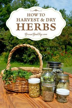 Designs For Garden Flower Beds Herbs That You Plan To Dry For Storage Should Be Harvested At Their Peak To Conserve The Herbs Natural Oils Responsible For Flavor, Aroma, And Medicinal Properties. The Timing Depends On The Plant Part You Are Harvesting And Healing Herbs, Medicinal Plants, Parts Of A Plant, Growing Herbs, Organic Gardening, Herb Gardening, Herbs Garden, Fruit Garden, Container Gardening