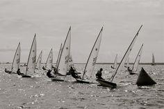 Sailing Lasers  #blackandwhite