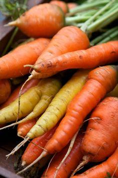freshly harvested organic carrots :)