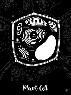 Plant Cell black and white print Little Biologist by Follygraph