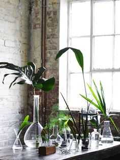 ATELIER RUE VERTE , le blog: Ce matin ... j'ai aimé #7 / Des plantes dans la maison /