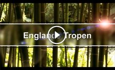 Video: Englands Tropen. Trebah is a subtropical garden situated in Cornwall, England.