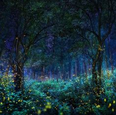 Sanctuary of fireflies. Photo by Pepe Soho, forest in Nanacamilpa, Tlaxcala, Mexico Magical Forest, Dark Forest, Amazing Places On Earth, Wonderful Places, Night Forest, Destination Voyage, Fantasy Landscape, Out Of This World, Surrealism