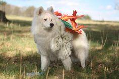 OMG an actual dog cosplaying as Amaterasu...*fangasms*