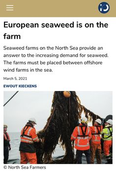 Offshore Wind Farms, North Sea, Seaweed, Farmer, Amsterdam, Kitchen, Cooking, Kitchens, Farmers