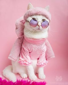 Cute Animals In Costumes Cats Cute Baby Cats, Cute Cats And Kittens, Cute Baby Animals, I Love Cats, Cool Cats, Kittens Cutest, Costume Chat, Pet Costumes, Cute Cat Costumes